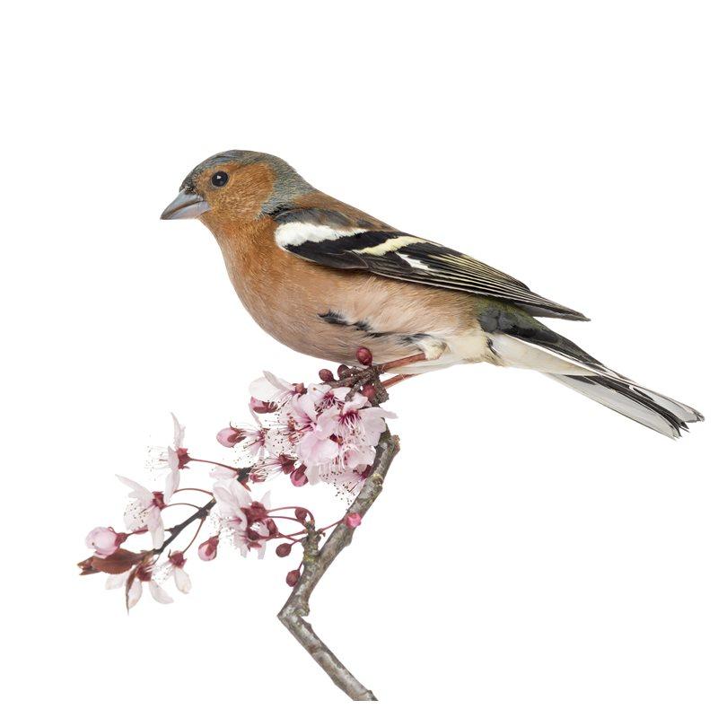 Oiseau sauvage