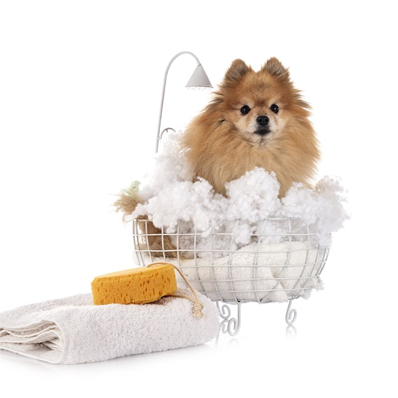 Soins, hygiène et propreté pour chiens