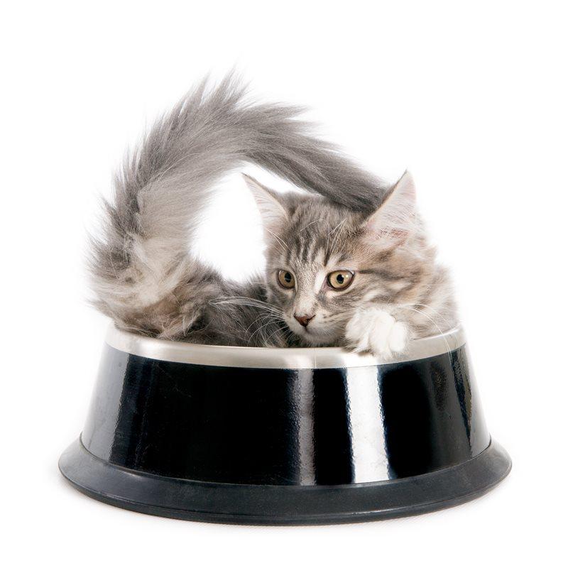 Nourriture pour chats